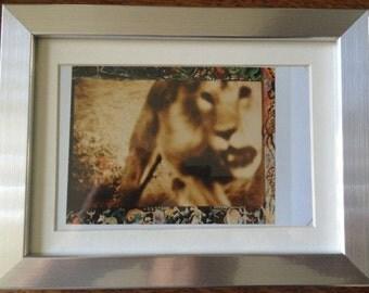 Peter Beard Lion  RARE 100% ORIGINAL POLAROID Framed Photogravure