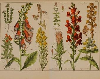 Vintage Botanical Print [2]