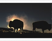 5 Unused Buffalo Forever Postage Stamps // American Bison // Yellowstone National Park // Stamps for Mailing