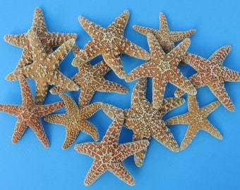 "Sugar Starfish 4"" - 6"" . 3 Pieces - Beach Decor - Beach Wedding Decor - Craft Supplies"