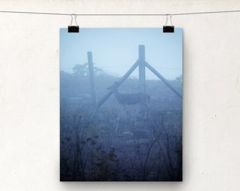 Wildlife Photograph, Deer Photo, Dusk Fog, Blue Haze, Doe, California