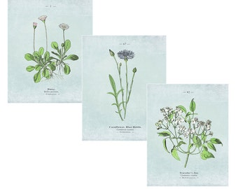Instant Download Set: Botanical Print, Botanical Art, Flower print, Vintage Botanical, Floral Print, Botanical Wall Art, Blue Wall Art
