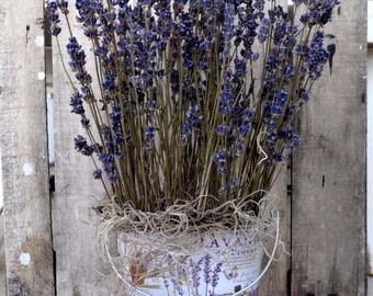 Lavender With Metalic Pot -  Lavender Arrangement - Lavender Decoration