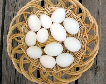 DUCK Eggs, One Dozen Mixed, Clean and Blown for Easter Crafts, PYSANKY, Carving, Etching, Home Decor