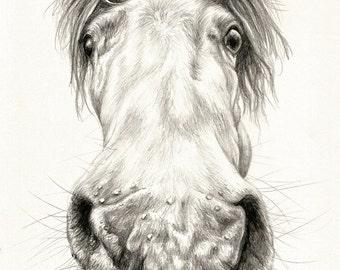 Nosy Horse - Pencil Drawing