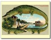 Bath House, St. Augustine, Florida Vintage FL REPRO Postcard