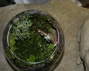 DIY moss kit with glass container