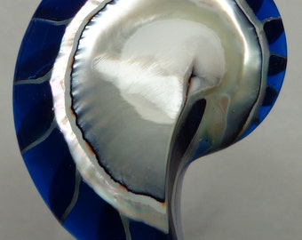 Blue Tiger Nautilus Shell half 60mm x 43mm x 12mm