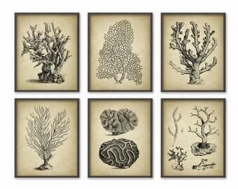 Vintage Coral Wall Art Set Of 6 - Marine Wall Art Posters - Nautical Print - Marine Biology Wall Art AB412