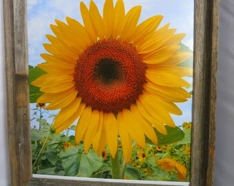 Sunflower print in a Rustic Framed Photo, or art