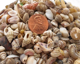 Tiny Sea Shell Mix for Crafts or Jewelry Making - Sea Shells, Beach Wedding, Scrapbooking, Jewelry, Crafting Shells, Tiny Shells, Shells