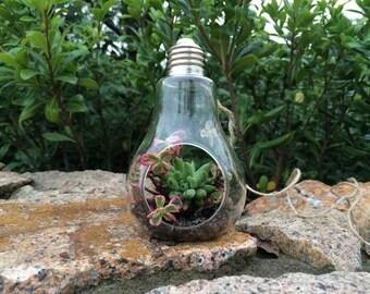 LIGHT BULB - Air Plant Hanger // Industrial Hanging Planter // Boho Interior // Glass Terrarium // Hanging Vase // Light Bulb Vase