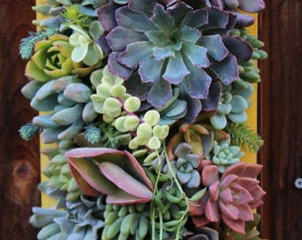 "SALE!! 12"" x 7""-Custom Succulent Vertical Garden Made to order"