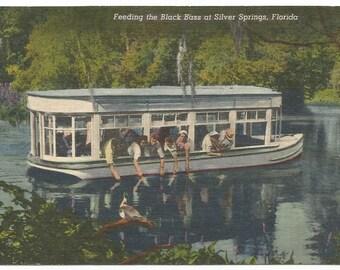 Silver Springs, Florida Feeding the Black Bass Linen Era Postcard