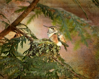 Hummingbird Print, Baby Hummingbird, Hummingbird Wall Art, Hummingbird Decor, Baby Birds, Bird Nest, Nature Photo, Wildlife Photography