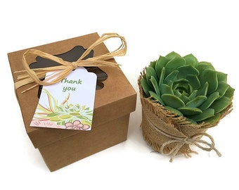 Individual Succulent in Gift Box-4 inch Succulent Gift-Thank You Gift-Succulent Gift Box-Hostess Gift-Birthday Gift-Gardener Gift-Garden Box