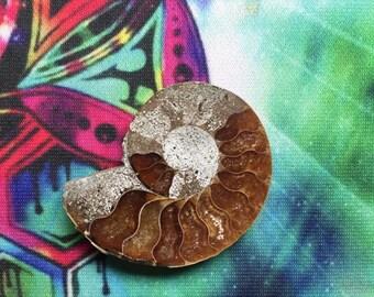 Single Ammonite Slice