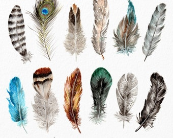 Watercolor Feathers Clipart - Watercolour Feathers, Hand Painted Feathers, Feather Clipart, Clipart Feathers, Tribal Clipart