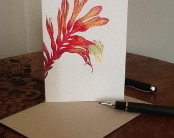 Blank Card, Kangaroo Paw