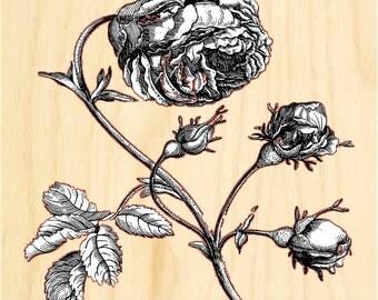 Rose on wood panel