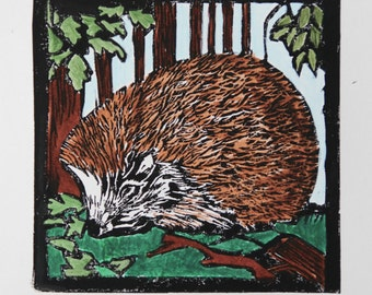 Hedgehog Lino print by Ann-Marie Ison (50% donated to charity)