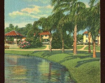One of the Many Picturesque Lakes in Florida Vintage Postcard 343