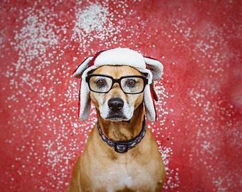 Hipster Hound