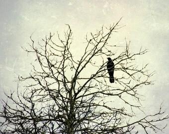 Tree Nature Photography Black Raven Bird October Winter Season Tree Branches Fine Art Photo Print Home Decor Trees Birds Crow Print