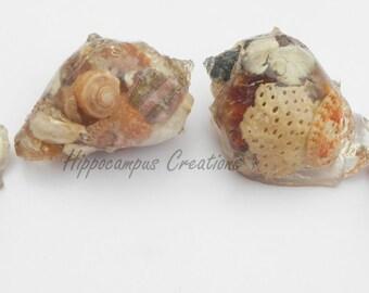 Shell or Urchin Sea Cast