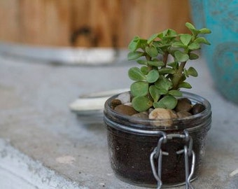 Glass Jar Planter Kits - Small
