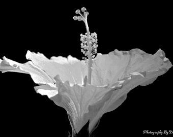 Simple Elegance Black and White Floral Photo Botanical Art Nature Photographic Print