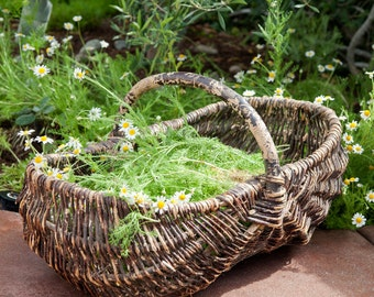 Lovely French Willow Gathering Basket - Large Size - 1940s - Free Shipping Within the USA