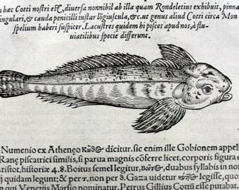 1558 Conrad Gesner folio - SPINED LOACH FISH Aquatic - 4 original antique vintage woodcuts. 457 years old.
