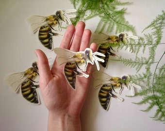 Bee Sticker, Original artwork stickers, Die cut stickers, Nature, Garden