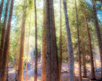Enchanted forest photography, Outdoors, Emerald Bay National Park, light through the trees, green art, nature wall art, kid's bedroom decor