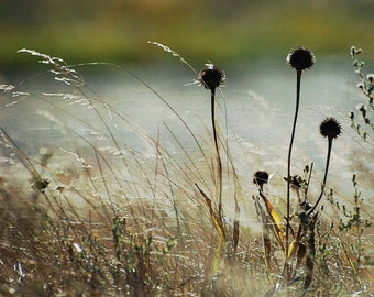 Weeds Blowing in the Wind, Fine Art Print