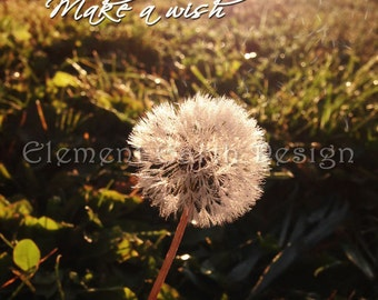 Make a Wish Dandelion Photo, Instant Download, 11x14, Digital Printable, Fine Art Digital Photo, Photography, nature walk, landscape
