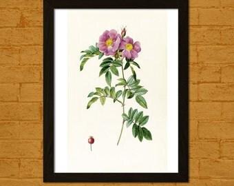 Vintage Flower Print - Vintage Botanical Print Flower Print Romantic Wall Art Floral Illustration Flower Art Redoute Flower