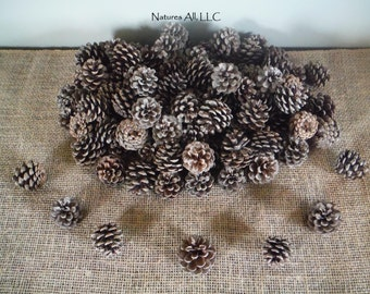 Decorative Pine Cones/Natural Pine Cones/80 Piece Box/For Rustic Wedding & Home Décor/Shipping Included: Item# PC-1100