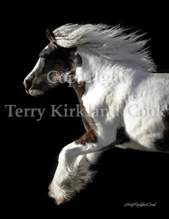 The Gorgeous Filly ~ Copyrighted Photograph by Terry Kirkland Cook