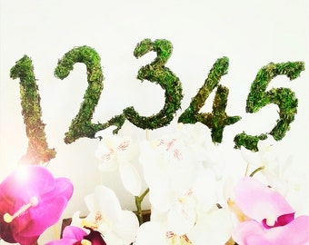 Moss Table Numbers 1-5 With Sticks