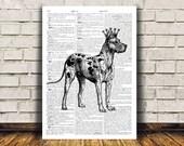 Great dane print Modern decor Dog poster Animal art RTA121
