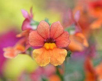 Beautiful Orange Flower Garden Photograph #241