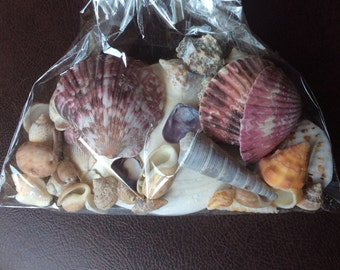 Exotic Seashells and Coral (300g pkgs)