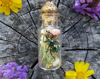 Real Insect Jewelry Terrarium Necklace Pachyrhynchus Jewel Weevil rare Nature jewelry Entomology Specimen Curio odd organic boho insect art