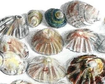 Sea Shells, Nautical Wall Painting, Ideal for - Marine Life Art, Shell Art Decor, Beach Home Decor, Seashell Print. Seashell Watercolor Art.