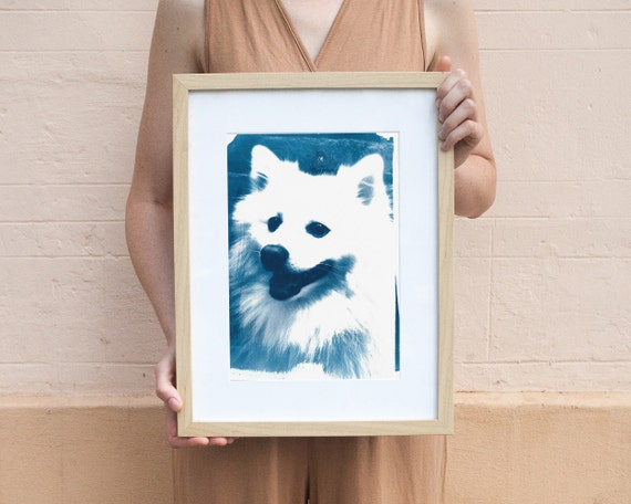 Japanese Spitz Dog, Cyanotype Print on Watercolor Paper, A4 size (Limited Edition)
