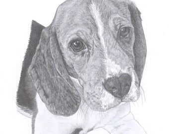 BEAGLE dog Limited Edition art drawing print signed by UK artist