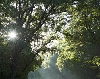 Morning Has Broken - roadtrip photograph - sunshine rural travel southern road