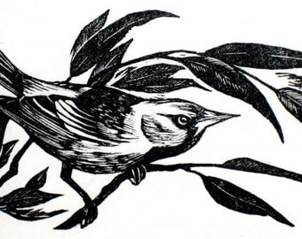 Oriole, wood engraving